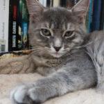 Tyche (kitten) against a book shelf